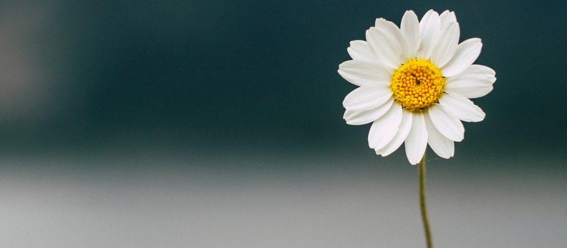 Fiore, petalosa