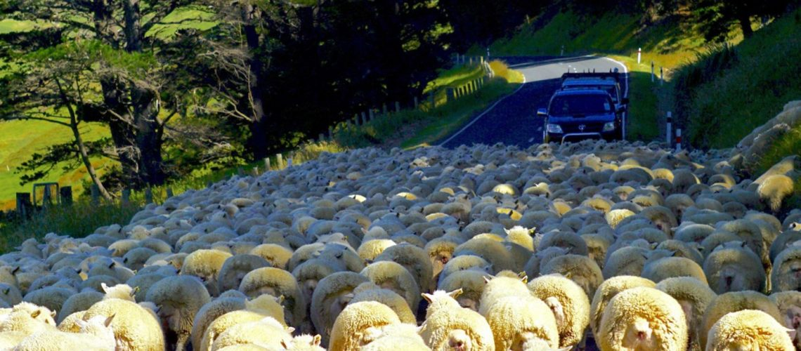 one-too-many-roadblocks_t20_2JNXAP-1